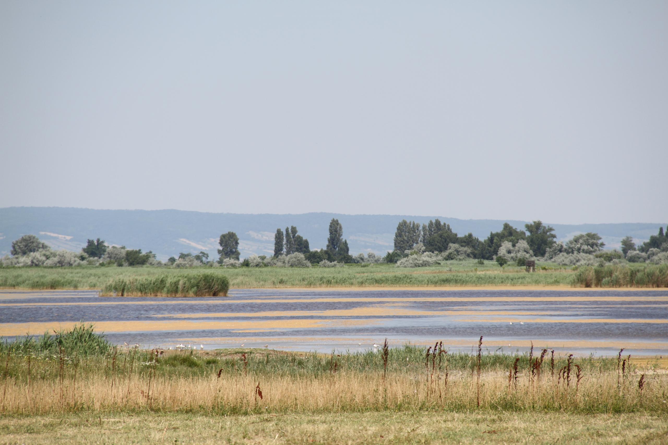 Seewinkel Landschaft