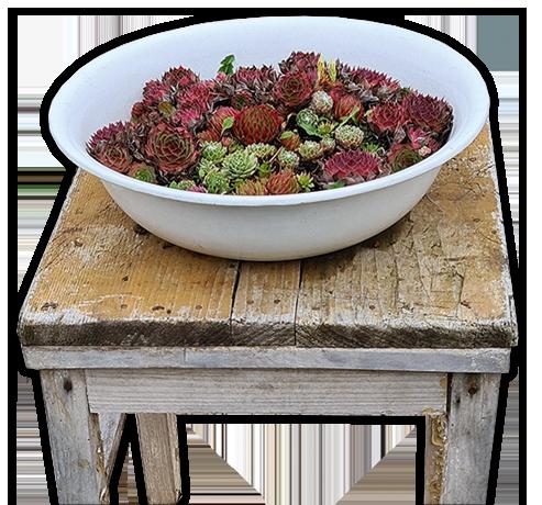 ein Teller mit Blumen auf einem Stuhl