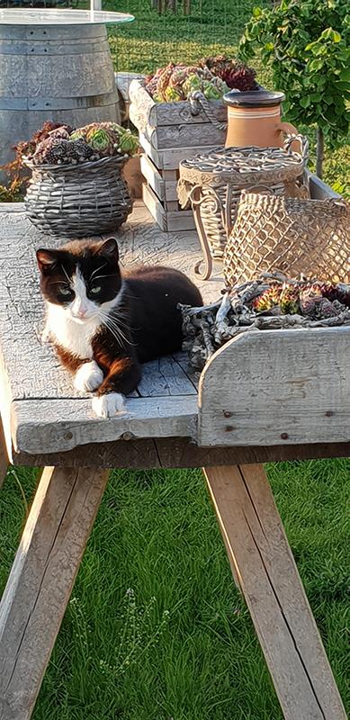 Katze am Caprahof
