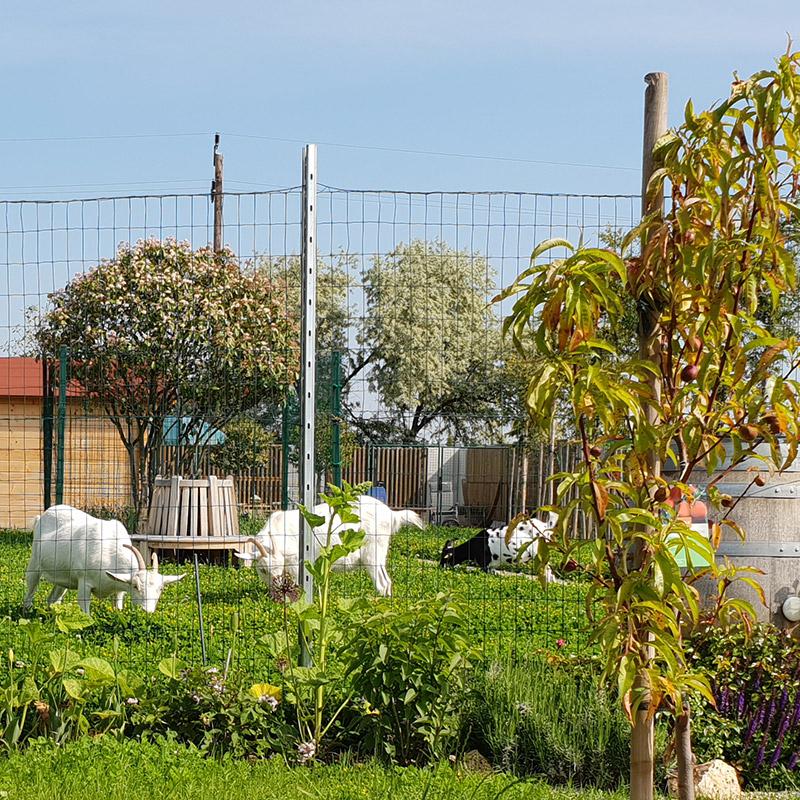 Ziegengarten am Caprahof